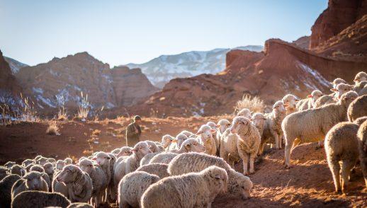 """""""Shepherd Me, O God"""""""